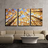 "wall26 - Aspen Trees with Fall Color - Canvas Art Wall Decor - 24""x36""x3 Panels"