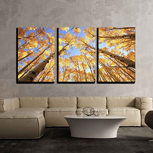 Green Aspen Trees - wall26-3 Piece Canvas Wall Art - Aspen Trees with Fall Color, San Juan National Forest, Colorado, Usa - Modern Home Decor Stretched and Framed Ready to Hang - 16