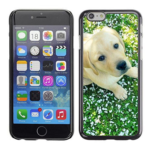 Premio Sottile Slim Cassa Custodia Case Cover Shell // V00003240 chien et ressort // Apple iPhone 6 6S 6G PLUS 5.5""