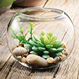 Succulent and Air Plant Terrarium DIY Kit With Faux Succulents, River Rocks, Pebbles, and Heavy Round Glass Vase by Habitat