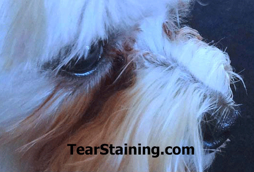 Scared Poopless The Straight Scoop On Dog Care Chiclet T border=