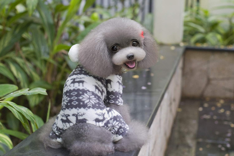 Costume da compagnia per feste Vestiti per cani vestiti per animali domestici vestiti per animali domestici articoli per animali domestici in velluto a quattro zampe (colore  Grigio, Taglia  XXL) Pet