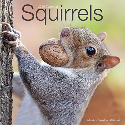Squirrel Calendar - Cute Animal Calendar - Calendars 2017 - 2018 Wall Calendars - Animal Calendar - Squirrels 16 Month Wall Calendar by Avonside