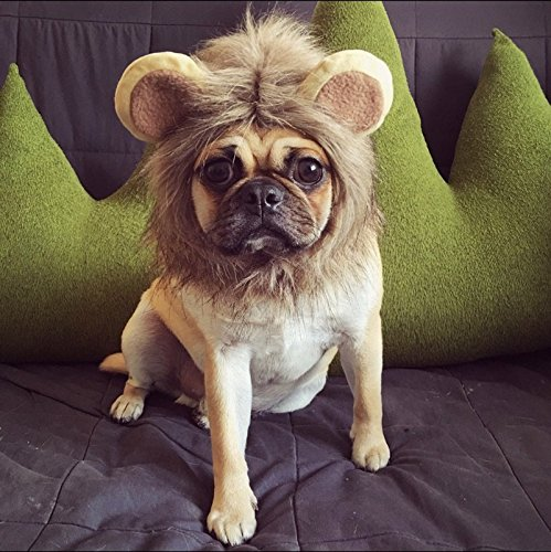 Itplus Pet Cosplay Costume Adjustable Lion Mane Wig Hat for Cat or Small Dog Puppy Hair Accessories Dress up with Ears Christmas Party Festival by Itplus (Image #8)