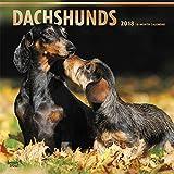 2018 Dachshund Dogs Wall Calendar BEST VALUE {jg} Best Holiday Gift Ideas - Great for mom, dad, sister, brother, grandparents, grandchildren, grandma, gay, lgbtq.