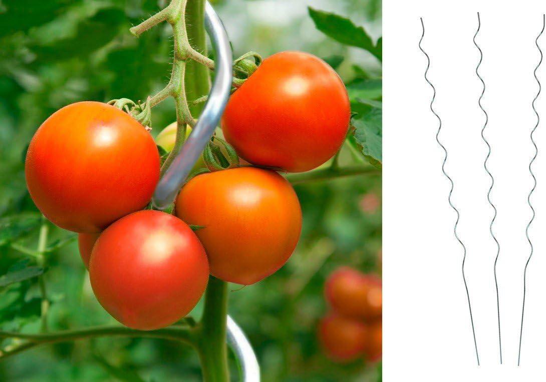 10 pieza Tomate espiral varilla 180 cm Tomates espiral – Varilla ...