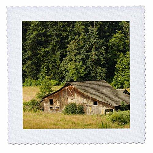 3dRose qs_96898_1 WA, Fidalgo Island, Barn with Conifer Forest-US48 TDR0241-Trish Drury-Quilt Square, 10 by - Square Wa