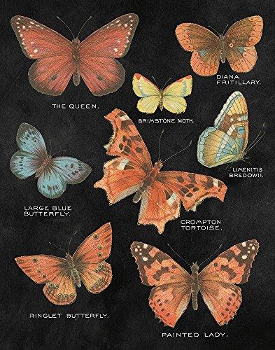 (Botanical Butterflies Postcard IV Black by Wild Apple Portfolio Art Print, 17 x 22 inches)
