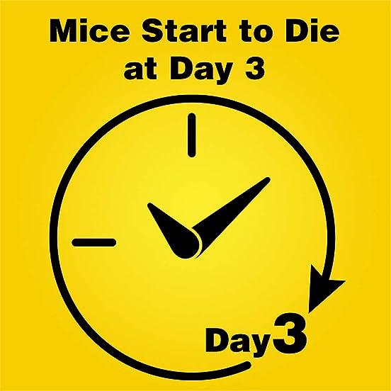 D-Con Mice Die