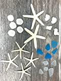 Nautical Assortment 25 Pieces | White Finger Starfish | Sea Biscuit | Aqua Blue Sea Glass | Clear Sea Glass | Pearlized Turbo Shells | Shells for Crafts | Nautical Crush Trading TM