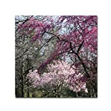 Mauve and Pink Flowering Trees of Spring by Kurt Shaffer, 24x24-Inch Canvas Wall Art