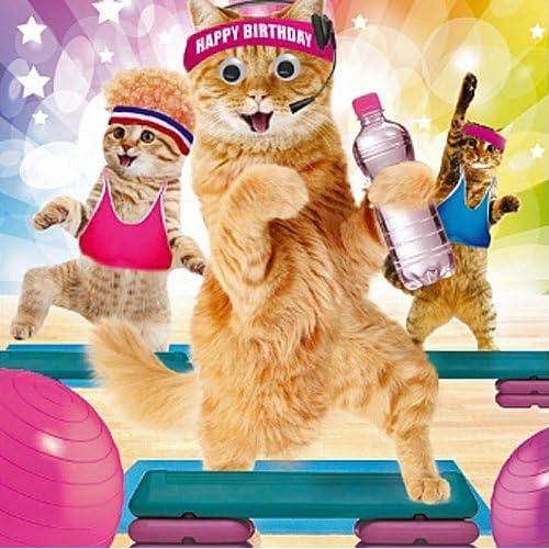 Funny Cat Birthday Card Amazon