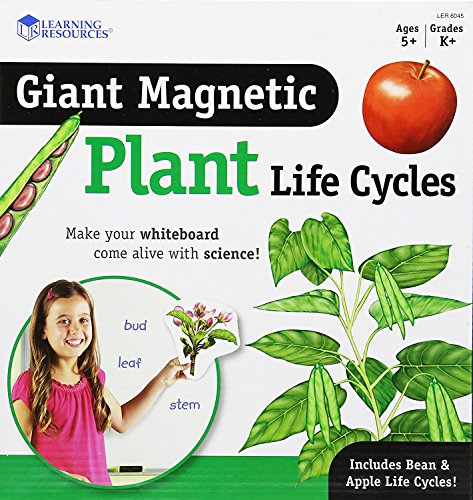 Learning Resources Giant Magnetic Plant Life Cycle -