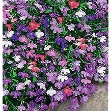 Flower Seeds Garden Lobelia Mix (Lobelia erinus) Annual
