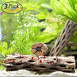 "SunGrow 3 Cholla Wood Pieces for Shrimp - Natural, Thorn-Free 6"" dried husk of Cholla cactus - Excellent Food Source, Protective Hideout - Organic Decoration by For dwarf shrimp, hermit crabs, pleco"