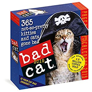 bad cat page a day calendar 2019