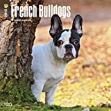 French Bulldogs 2018 12 x 12 Inch Monthly Square Wall Calendar, Animals Dog Breeds French (Multilingual Edition)