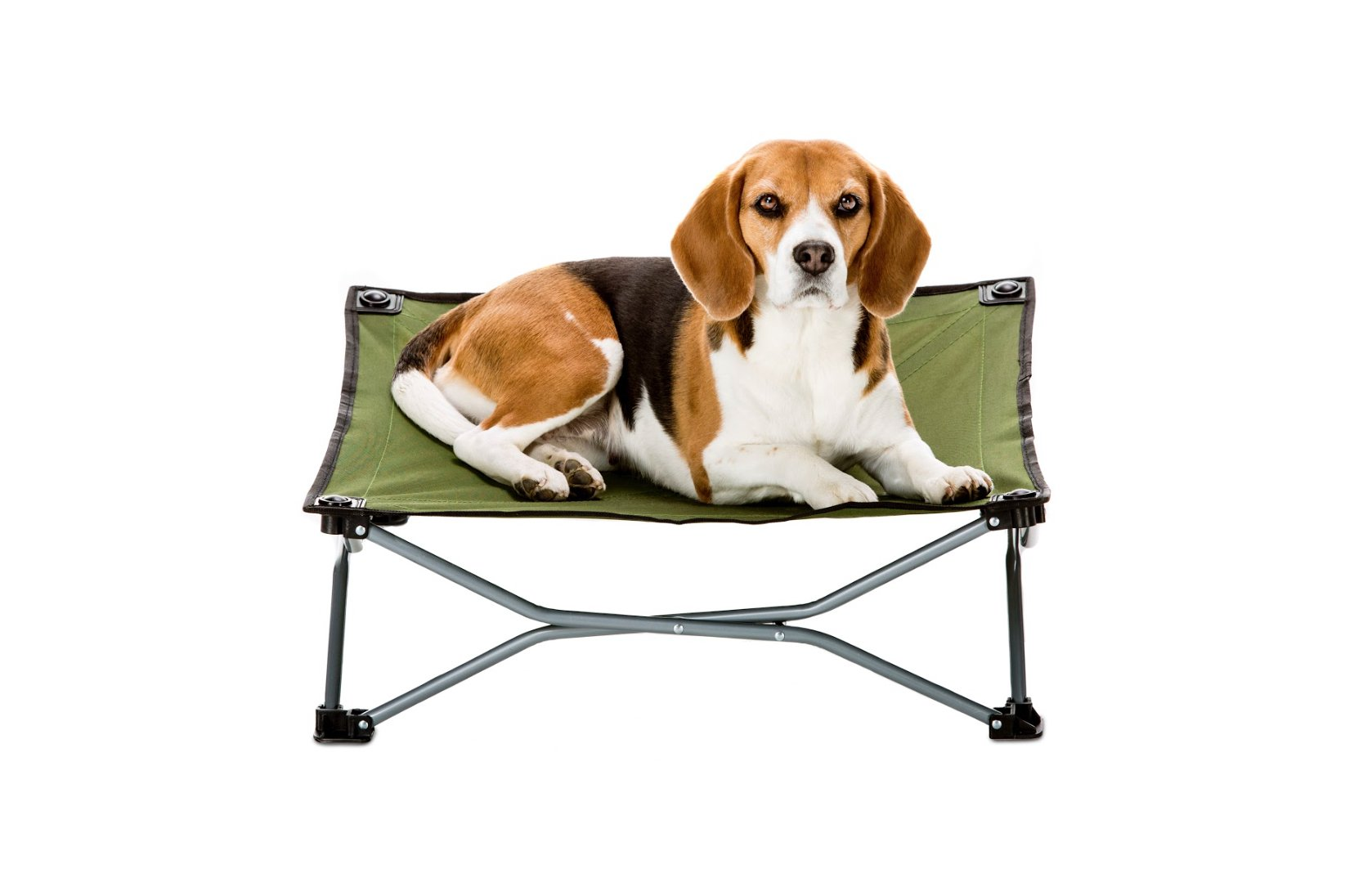Carlson Pet Products 8040 Elevated Folding Pet Bed 26'' Long, Includes Travel Case, Green