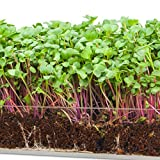 """Microgreen Zesty 3 Pack Refill – Pre-measured Soil + Seed, Use with Window Garden Multi-Use 15"""" x 6"""" Planter Tray. Easy and Convenient, Enough to Sprout 3 Crops of Superfood Greens."""