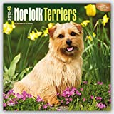 Norfolk Terriers 2016 Square 12x12 (Multilingual Edition)