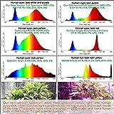 LED Grow Light 2000W Full Spectrum Led Light