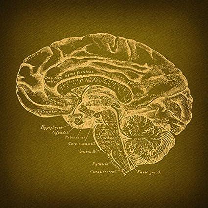 Amazon.com: Brain Diagram Print Antique Brain Wall Art & Home ...