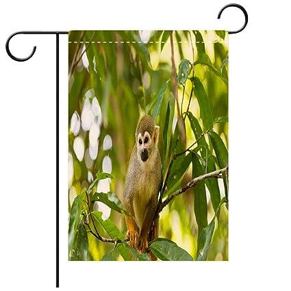 Amazon.com: BEICICI - Bandera de jardín de doble cara ...