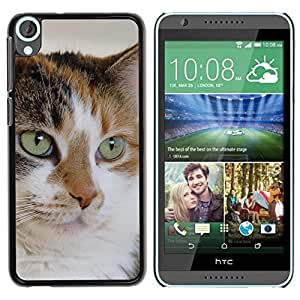 Be Good Phone Accessory // Dura Cáscara cubierta Protectora Caso Carcasa Funda de Protección para HTC Desire 820 // Mutt Mongrel Cat House Cat Mixed