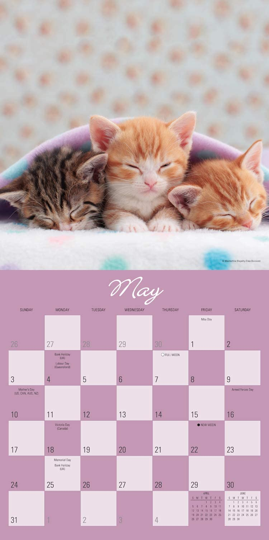 Cat Naps Square Wall Calendar 2020