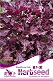Perilla Seed 50 Purple Rare Herb Seeds Natural Organic Healthy Plant D022 By Mikedaoer