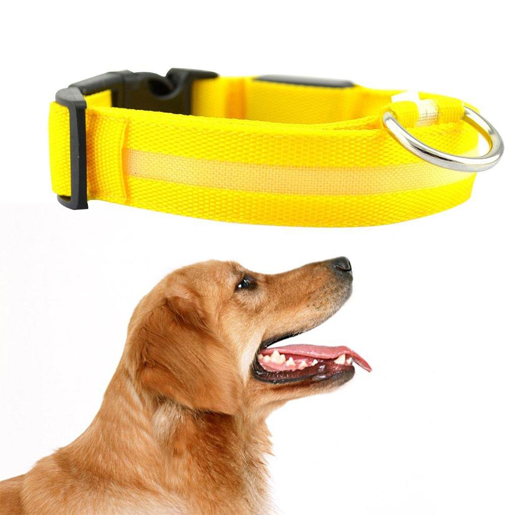 Regard L Collar de Perro Pet LED Correa Que Destella Perro Glow Neck Belt Collares para Mascotas Fluorescente Cat Cuello de la Correa de la Cuerda de la Cuerda