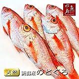 魚水島 のどぐろ 新潟・日本海産 ノドグロ 250g以上・5尾(生冷凍)