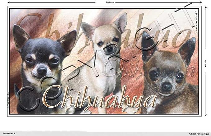 100 Cm Chihuahua Poil Court Sticker Dog 15 Cm 60 Par 33 Cm Amazon Co Uk Kitchen Home