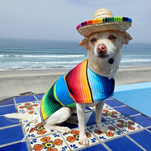 Baja Ponchos Dog Sombrero Hat - Funny Dog Costume - Chihuahua Clothes - Mexican Party Decorations