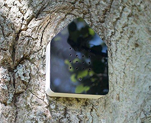 Amazon.com: relaxound caja de Zwitscher de madera, diseño de ...