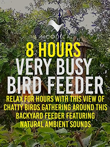 8 Hours: Very Busy Bird Feeder: Relax For Hours With This View of Chatty Birds Gathering Around This Backyard Feeder Featuring Natural Ambient Sounds (Back Feeder)