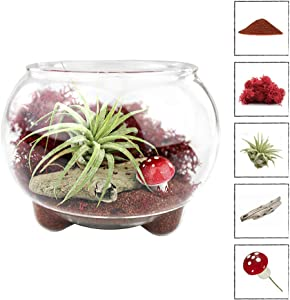NW Wholesaler - Air Plant Oasis Landscape Terrarium Complete Kit with Three Bubble Legs and All Accessories (Red Sand)
