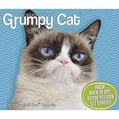 Grumpy Cat Calendar 2022.Buy Grumpy Cat Year In A Box 2019 Calendar Desk Calendar July 1 2018 Online In Indonesia 163571396x