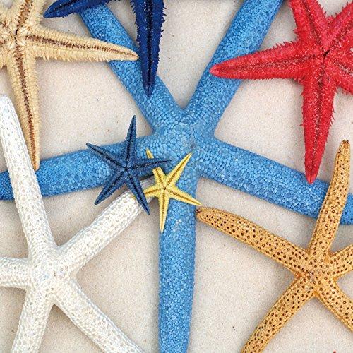 Cortesi Home Starfish Wishes Tempered Glass Wall Art, 12