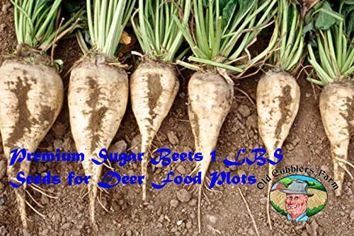 Premium Sugar Beets 1 Lb. For Deer Food Plots Excellent Product By Old Cobblers (Foods Beet Sugar)