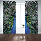 magnificent patio design ideas pictures SCOCICI Grommet Blackout Window Curtains Drapes [ Peacock,Magnificent Peacock Portrait Vibrant Colorful Feathers Photo Pattern,Blue Green Brown] Living Room Bedroom Kitchen Cafe
