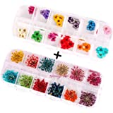 XICHEN 36 Starry Plus 36 Five Flower Flower Three-Dimensional Applique 3D Nail Stickers Nail Supplies Dried Flowers 2 12 Colo