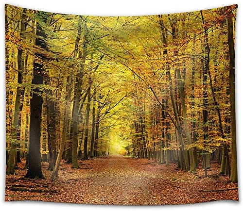 Road Through a Forest During Fall Time