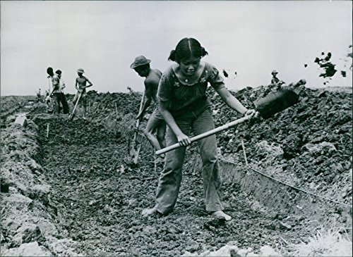 Vintage photo of Youth from Ho-Chi Minh City helping to prepares a 750-hectares of the Pham Van Hai area for banana ans pineapple cultivation. ()