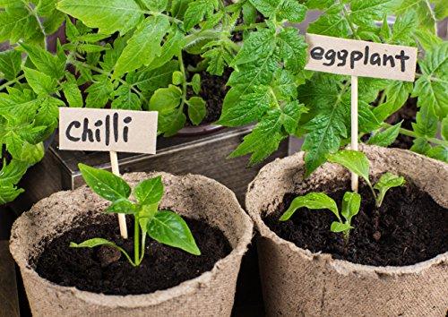 Peat Pots Pack Of 100 By Garden Monks -For Plant Starters, Seedlings,Saplings, Flowers,Vegetables-Eco Friendly & Biodegradable -Prevent Transplant Shock -Garden,Backyard,Kitchen Seed Planting