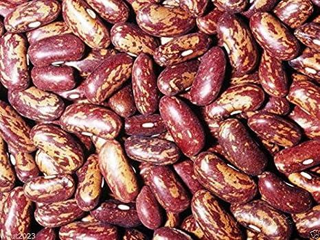 Amazon.com: 100 Español Tolosana Bean semillas a.k.a, Prince ...
