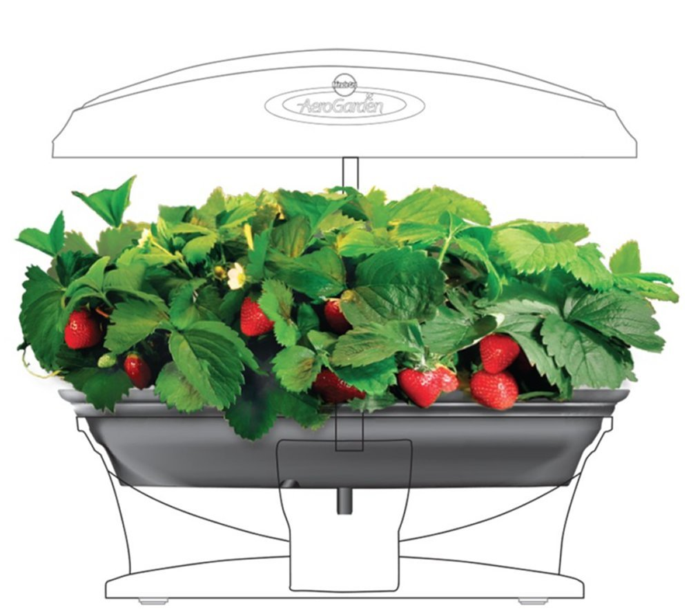 Strawberry Kit-AeroGarden Grow Bowl by AeroGrow