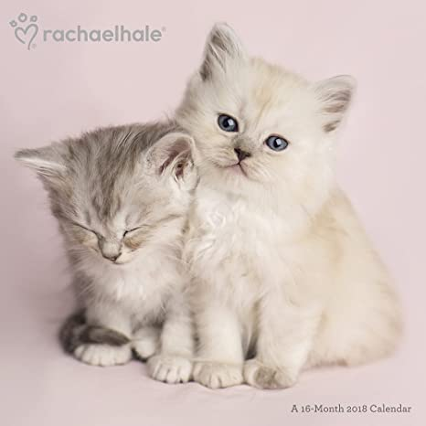 Rachael Hale gatos 2018 calendario de pared