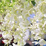 Xigeapg-Artificial-Silk-Wisteria-Vine-Ratta-Silk-Hanging-Flower-Wedding-Decor6-PiecesWhite
