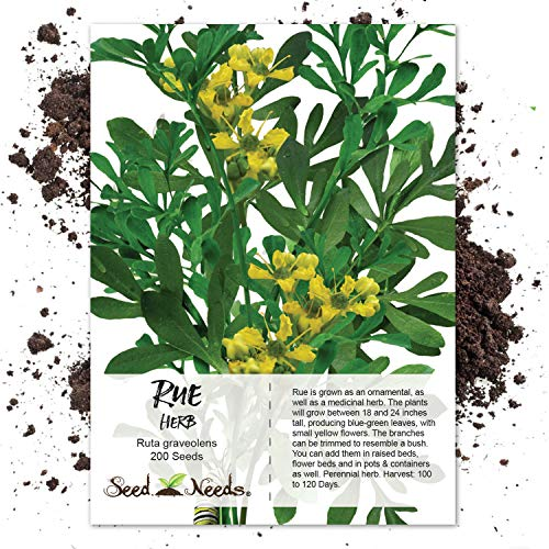 Free Shippingseed Needs Rue Herb End 772021 1200 Am